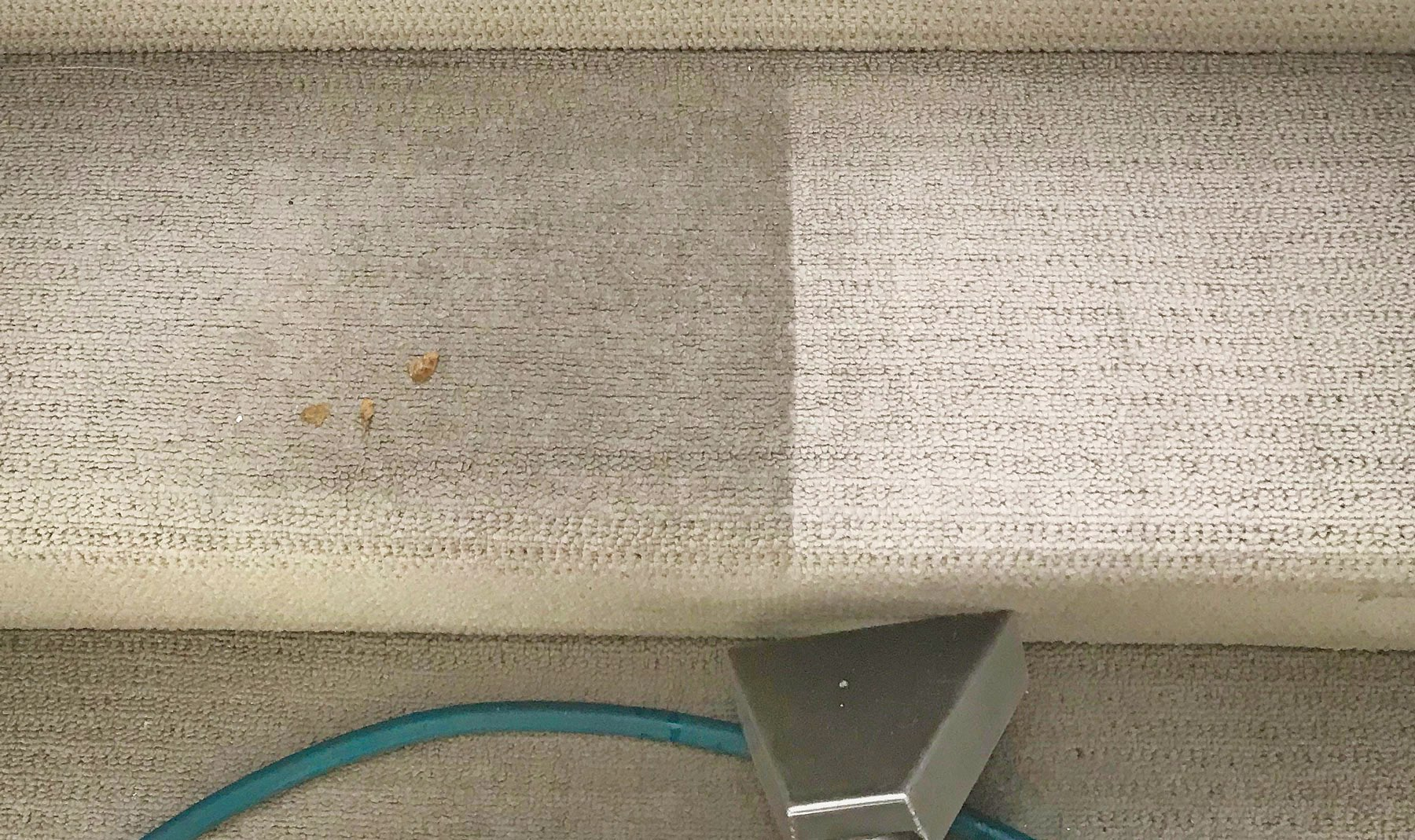Nest Carpet Cleaning Brisbane
